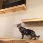06:施主様の飼っている猫の遊び場、キャットウオークです
