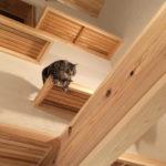 07:施主様の飼っている猫の遊び場、キャットウオークです
