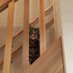 08:遊び疲れた時に階段で一息休憩中の猫の様子です