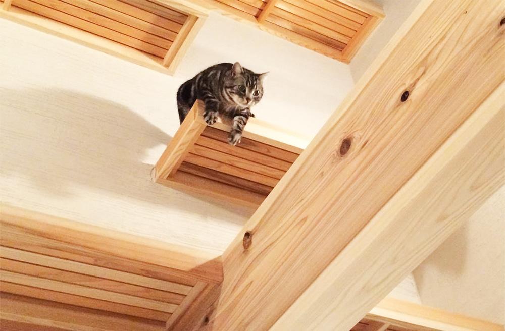 猫好き必見!新築を建てる時にできること